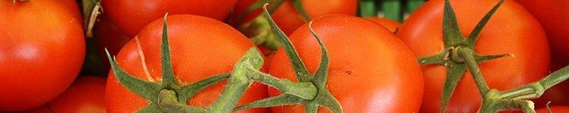 fresh shiny red tomatoes